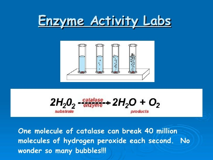 Catalase research papers