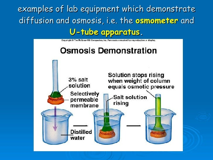 lab 4 diffusion and osmosis Bio 120 lab #1- osmosis, diffusion, and membrane permeability lab objectives after completing this lab topic, you should be able to: 1 describe the effects of a semi-permeable membrane on diffusion and osmosis.
