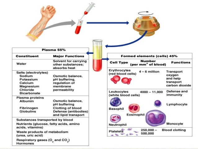 structure and function of erythrocytes