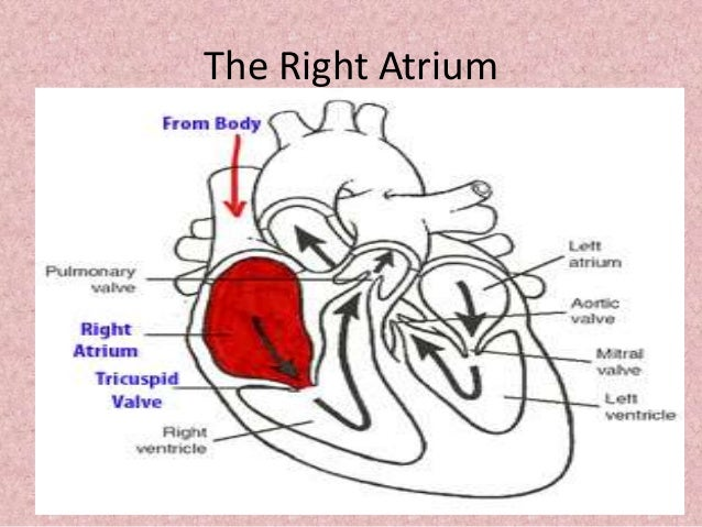 Johny\'s A&P Structure and Function of Heart