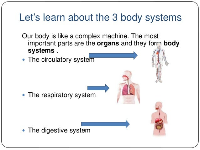 digestive respiratory and circulatory systems relationship