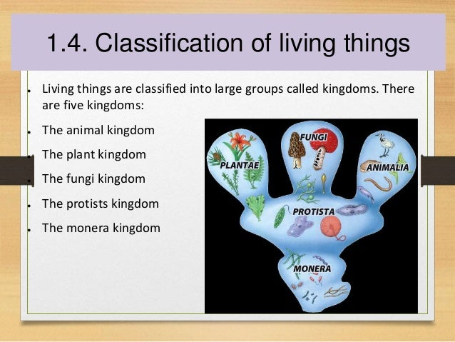 The Structure Of Living Things 24