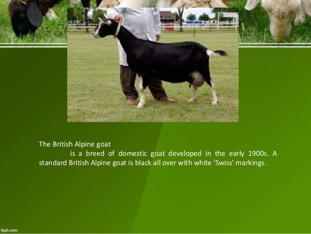 Overview of Goat and Sheep Prod'n & Mngt  and Breeds