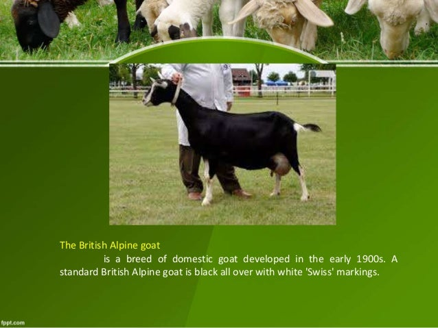 Overview Of Goat And Sheep Prod N Mngt And Breeds
