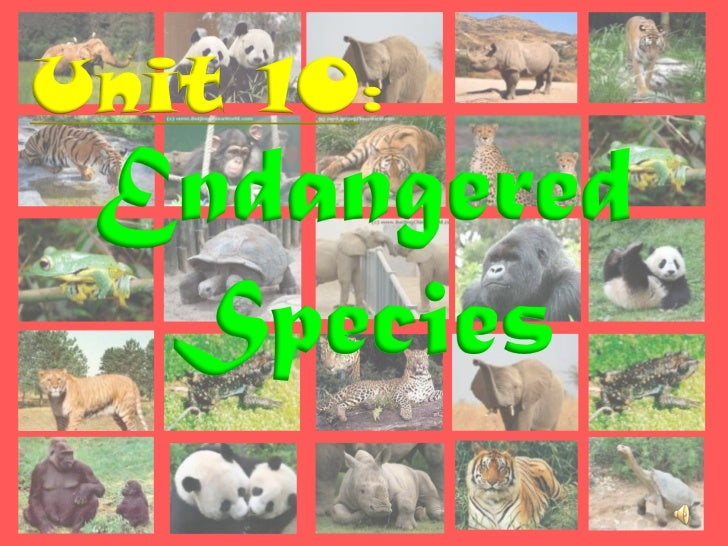 Unit 10: Endangered  Species
