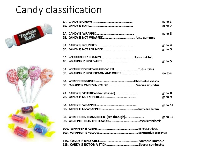 Printables Dichotomous Key Worksheet insect dichotomous key worksheet versaldobip copy of keys lessons tes teach