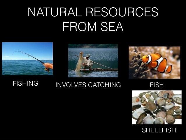 NATURAL RESOURCES FROM SEA FISHING INVOLVES CATCHING FISH SHELLFISH