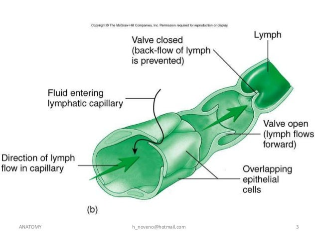 unit 11 lymphatic system