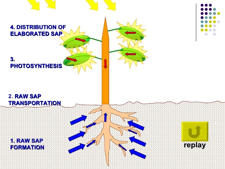Study photosynthesis game