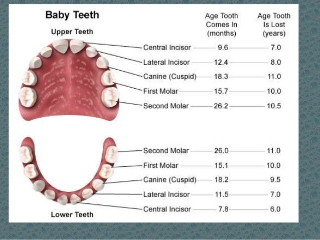 In what order do baby teeth fall out?
