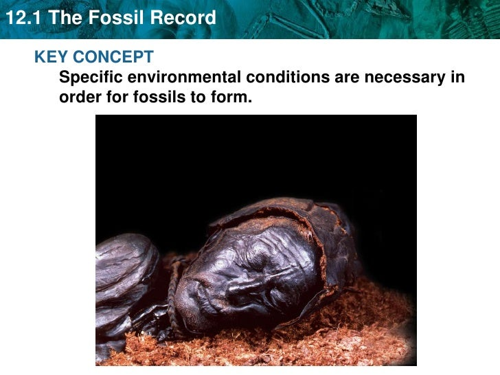 KEY CONCEPT Specific environmental conditions are necessary in order for fossils to form.<br />