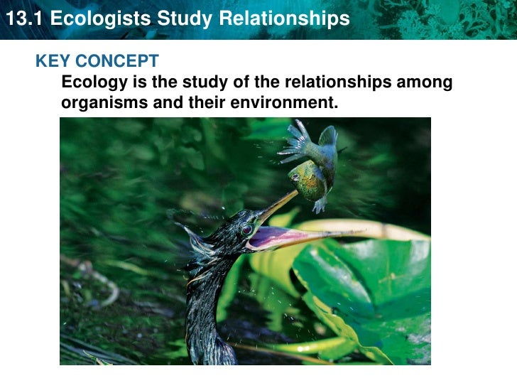 KEY CONCEPT Ecology is the study of the relationships among organisms and their environment.<br />
