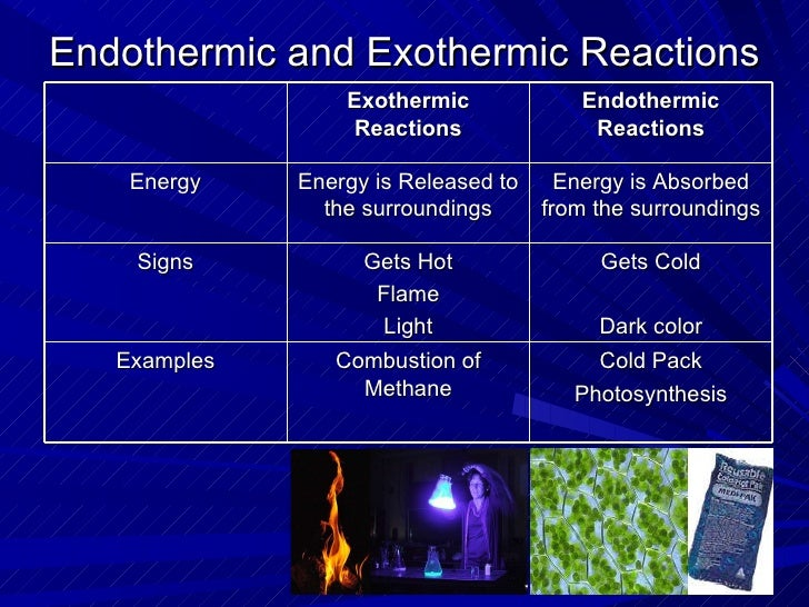 exothermic and endothermic essay