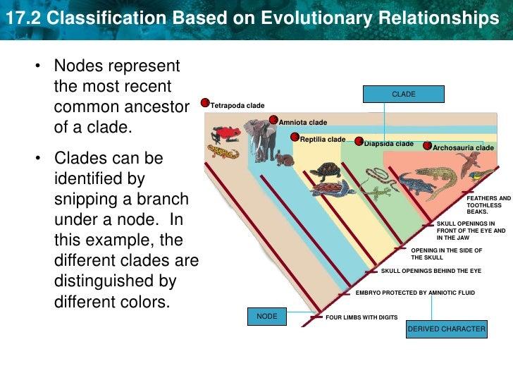 Unit 17a Scientific Classification