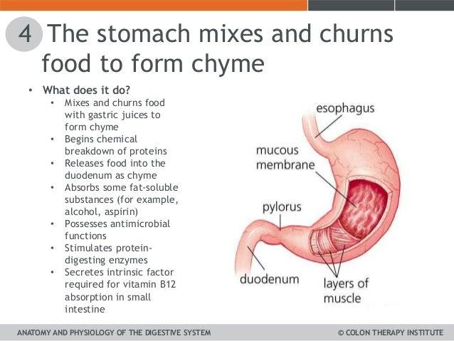 unit 1 a&p digestive system cti, Human Body