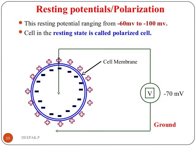 Resting potentials/Polarization This resting potential ranging from -60mv to -100 mv. Cell in the resting state is calle...