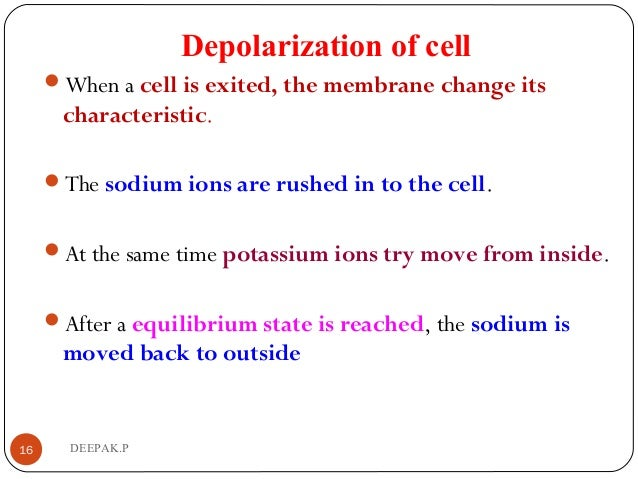 Depolarization of cell When a cell is exited, the membrane change its characteristic. The sodium ions are rushed in to t...