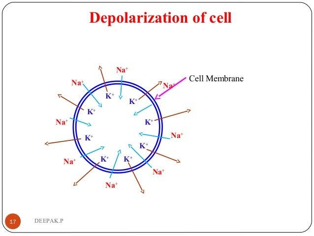 Depolarization of cell 17 DEEPAK.P Cell Membrane Na+ Na+ Na+ Na+ Na+ Na+ Na+ Na+ K+ K+ K+ K+ K+ K+ K+ K+