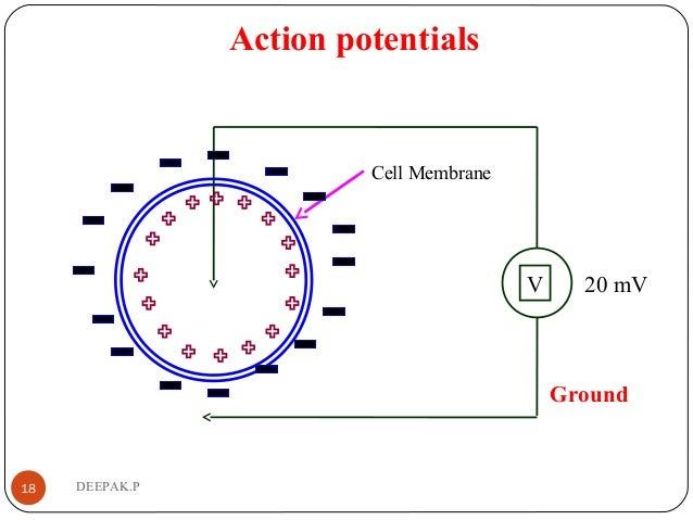 Action potentials 18 DEEPAK.P Cell Membrane V Ground 20 mV