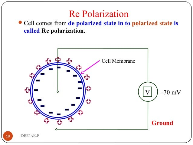 Re Polarization Cell comes from de polarized state in to polarized state is called Re polarization. 19 DEEPAK.P Ground V ...
