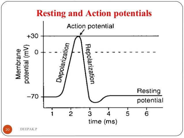 Resting and Action potentials 20 DEEPAK.P