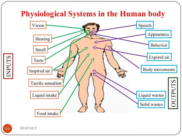 Physiological Systems in the Human body 24 DEEPAK.P Behavior Liquid wastes Solid wastes Body movements Expired air Appeara...