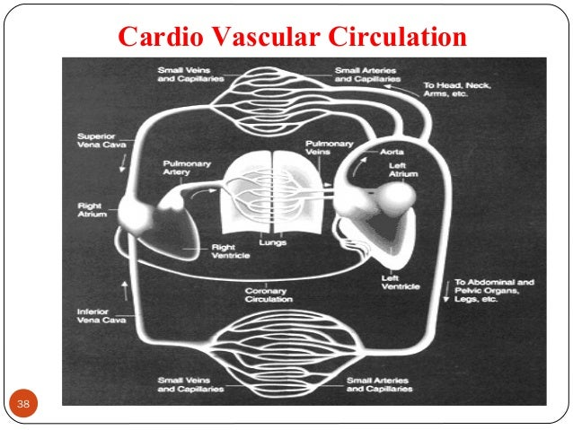 Cardio Vascular Circulation 38 DEEPAK.P
