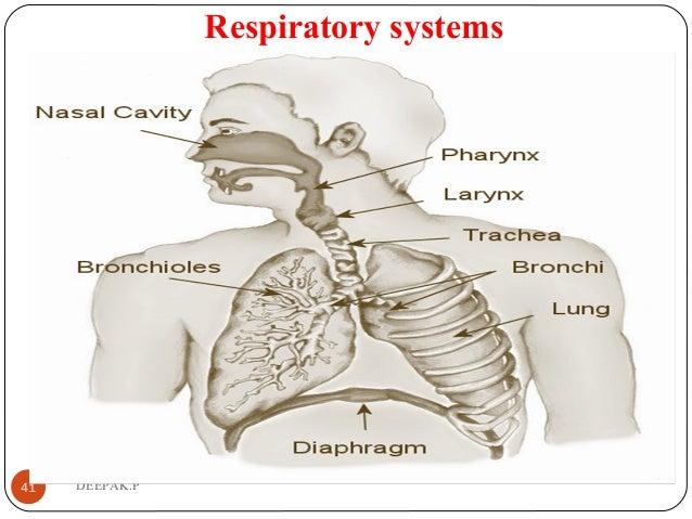 Respiratory systems 41 DEEPAK.P