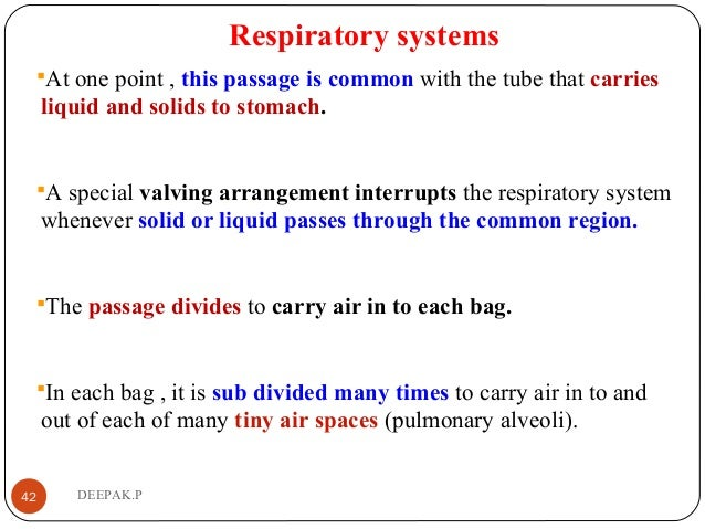 Respiratory systems At one point , this passage is common with the tube that carries liquid and solids to stomach. A spe...