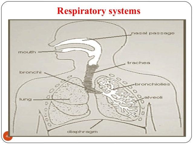 Respiratory systems 46 DEEPAK.P