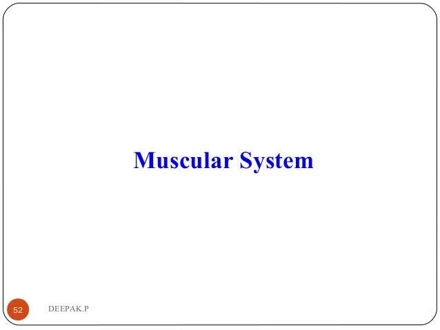 DEEPAK.P52 Muscular System