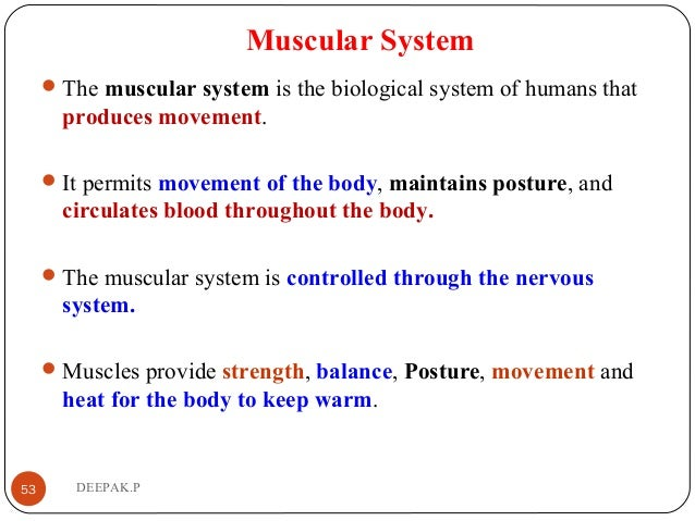 Muscular System The muscular system is the biological system of humans that produces movement. It permits movement of th...