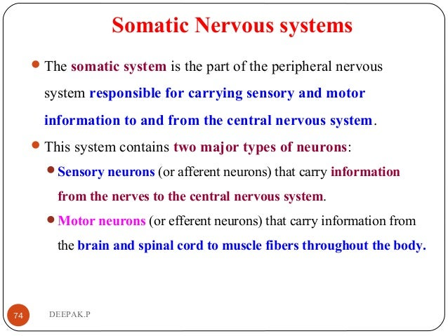 Somatic Nervous systems The somatic system is the part of the peripheral nervous system responsible for carrying sensory ...