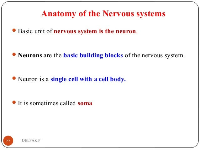 Anatomy of the Nervous systems Basic unit of nervous system is the neuron. Neurons are the basic building blocks of the ...