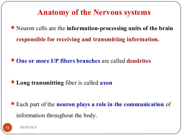 Anatomy of the Nervous systems Neuron cells are the information-processing units of the brain responsible for receiving a...