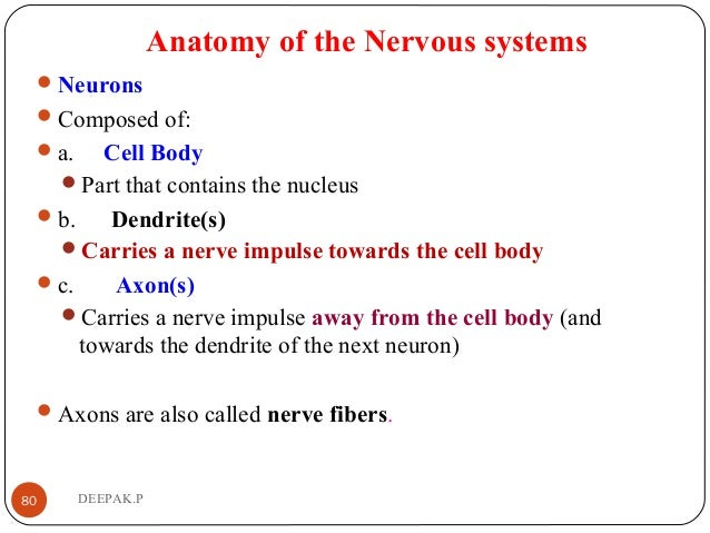 Anatomy of the Nervous systems Neurons Composed of: a. Cell Body Part that contains the nucleus b. Dendrite(s) Carri...