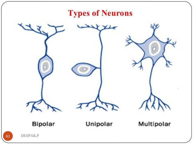 Types of Neurons 82 DEEPAK.P