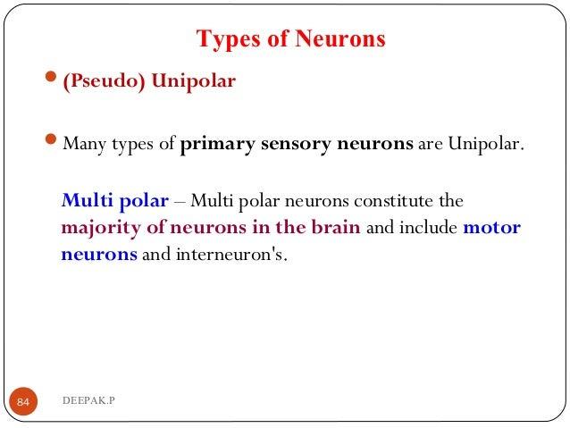 Types of Neurons (Pseudo) Unipolar Many types of primary sensory neurons are Unipolar. Multi polar – Multi polar neurons...