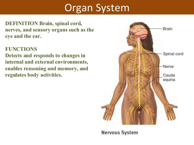 Unit 1 Introduction To Physiology