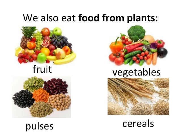 Food We Get From Plants