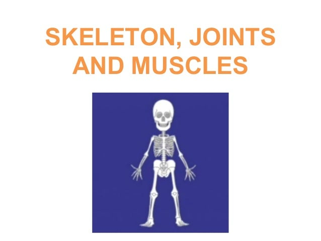 SKELETON, JOINTS AND MUSCLES