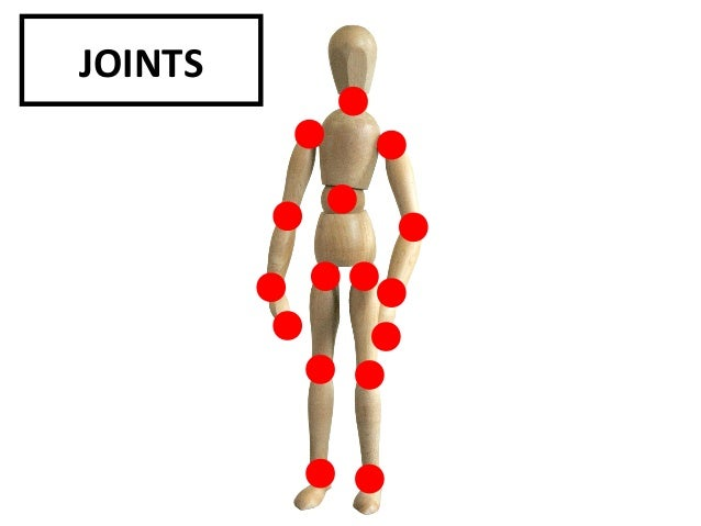 skeletal system in the scanlon sander essay Kids learn about the science of bones and the human skeleton how the skeletal  system supports the human body and protects it from harm.