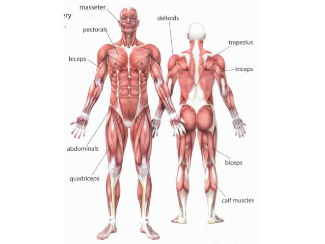 Unit 1 Skeleton Joints And Muscles
