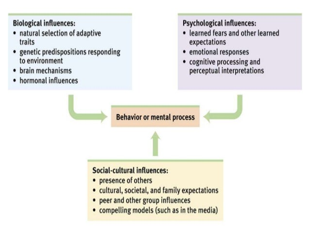 biopsychosocial perspective on personality how did The biopsychosocial approach to understanding pain has the biopsychosocial perspective how practitioners should evaluate personality to help manage.