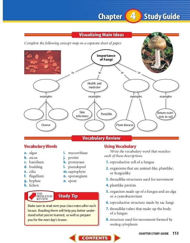 chapter 21 fungi study guide Create a free website powered by.
