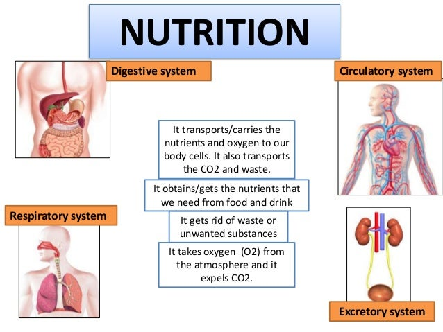Nutrition and the respiratory system.