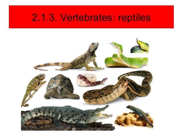Unit 2. vertebrates an...