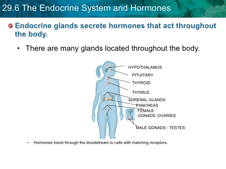 nonsteroid hormones are usually faster acting than steroid hormones because
