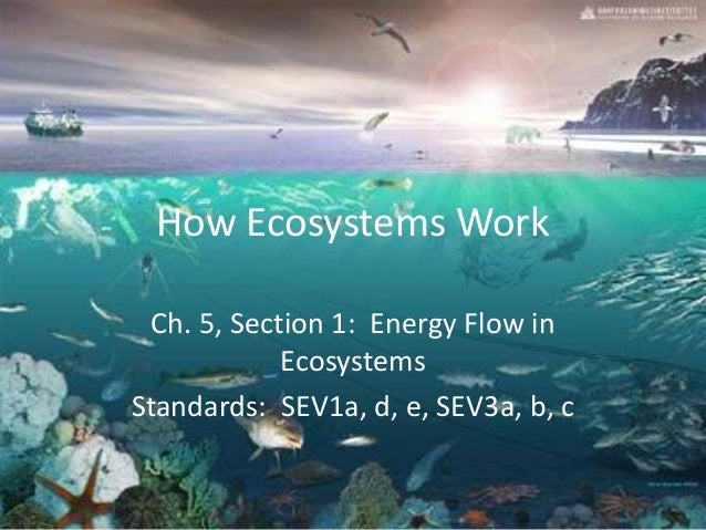 How Ecosystems Work Ch. 5, Section 1: Energy Flow in Ecosystems Standards: SEV1a, d, e, SEV3a, b, c