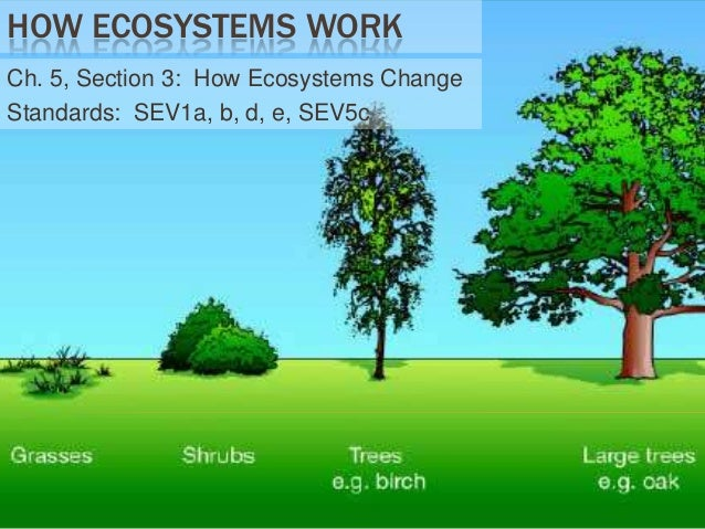 HOW ECOSYSTEMS WORK Ch. 5, Section 3: How Ecosystems Change Standards: SEV1a, b, d, e, SEV5c